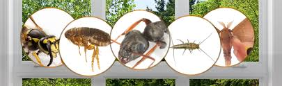 شركة مكافحة حشرات في دبى