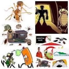 شركة مكافحة حشرات فى الفجيرة