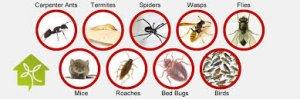 شركة مكافحة حشرات بابوظبى